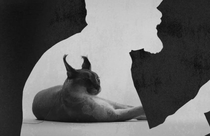 Disclosure объявили о новом альбоме «Caracal»