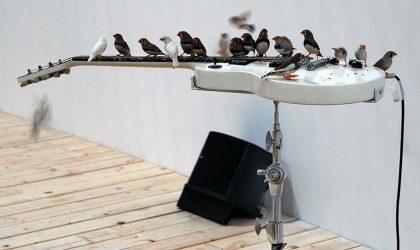 70 птиц играют на гитарах в Музее современного искусства в Монреале