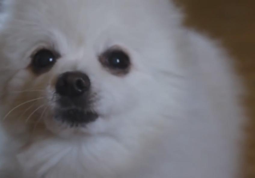 Смотрите, как собака исполняет трек Aphex Twin «Windowlicker»