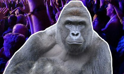 На фестивале Day for Night выступят Aphex Twin и голограмма гориллы Харамбе