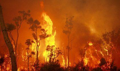Австралийские продюсеры собирают деньги на борьбу с пожарами в стране